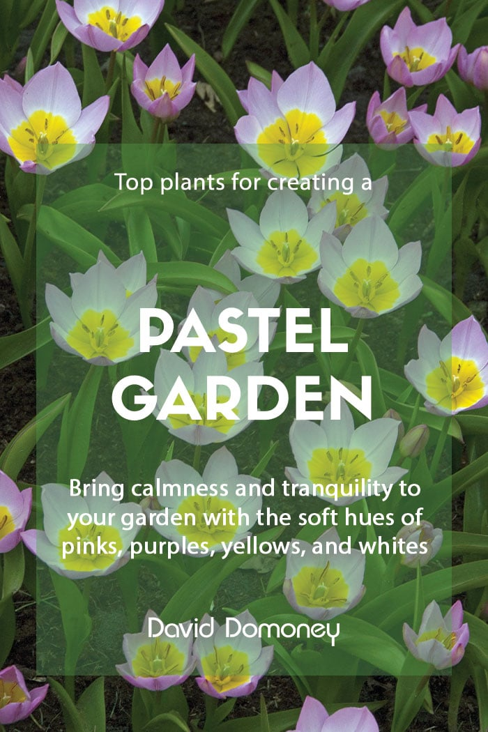 Top plants for creating a pastel garden