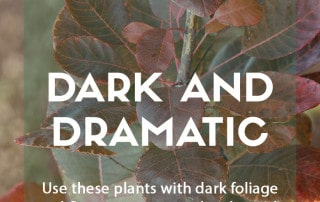 Top plants for dark and dramatic planting schemes
