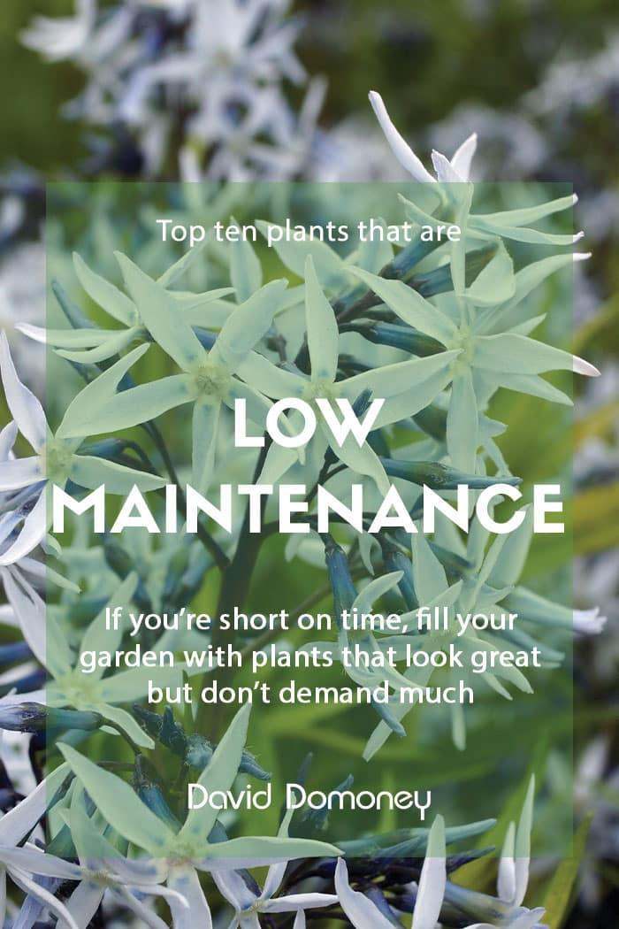 Top ten plants for low maintenance gardens