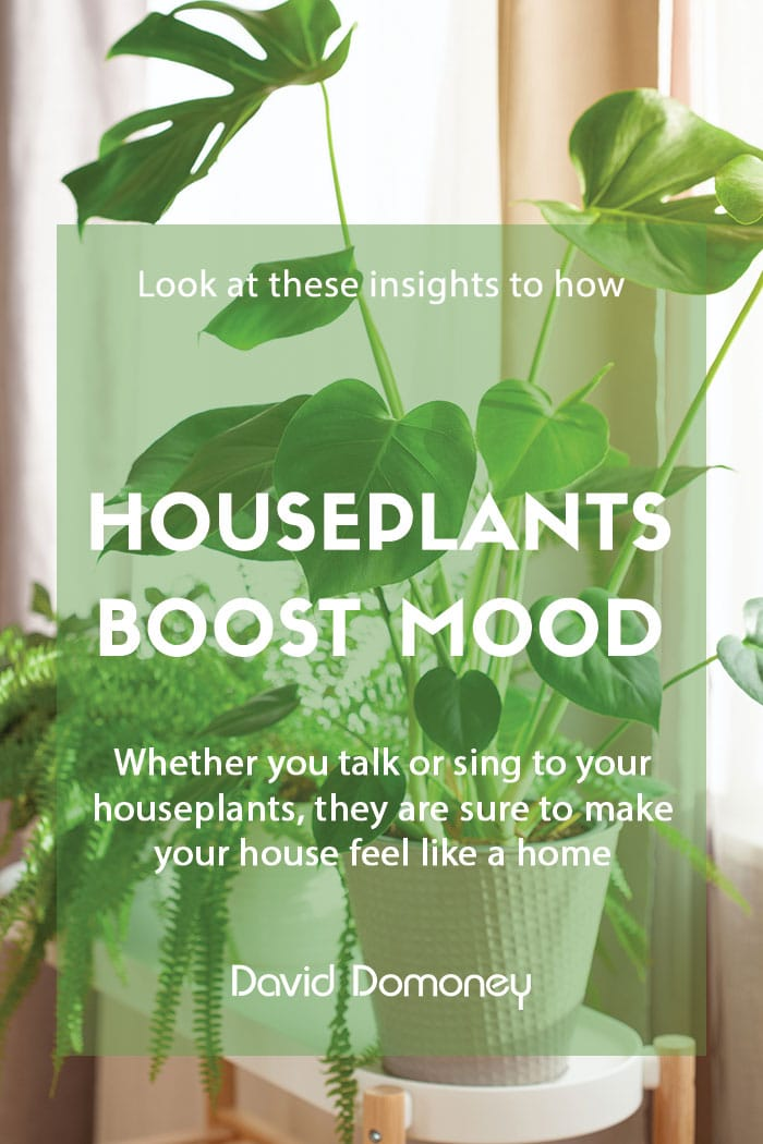 Houseplants boost wellbeing and mood