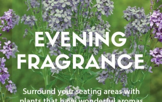 Plants for purpose - Plants for evening scent
