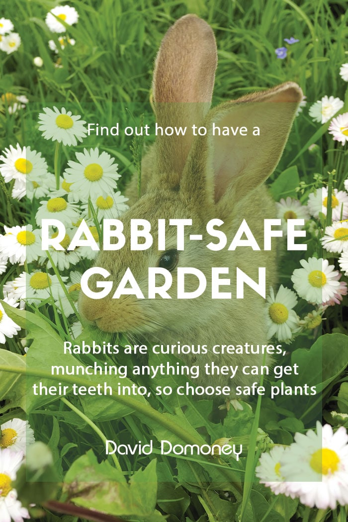 How to make your garden safe for rabbits