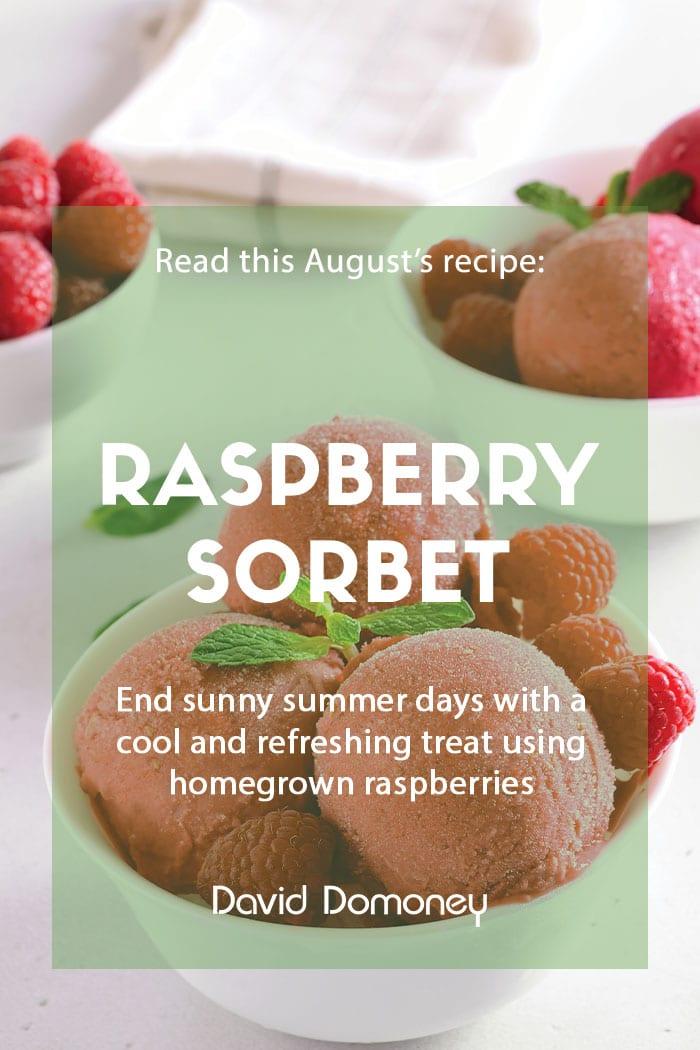 Raspberry sorbet recipe card