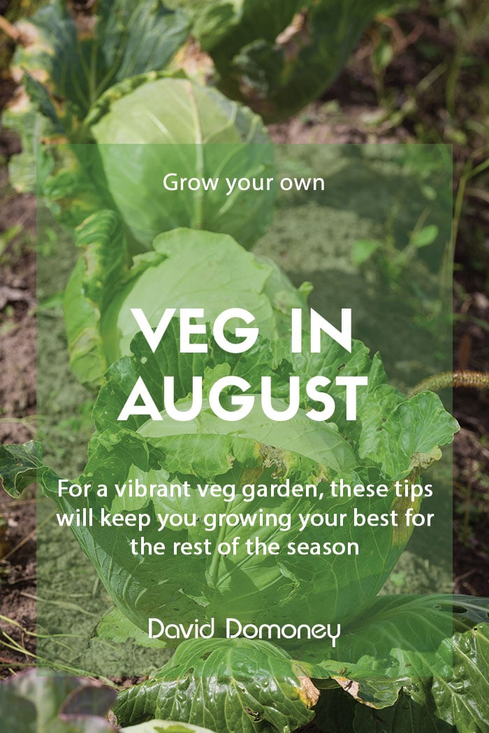 Top grow your own veg for August