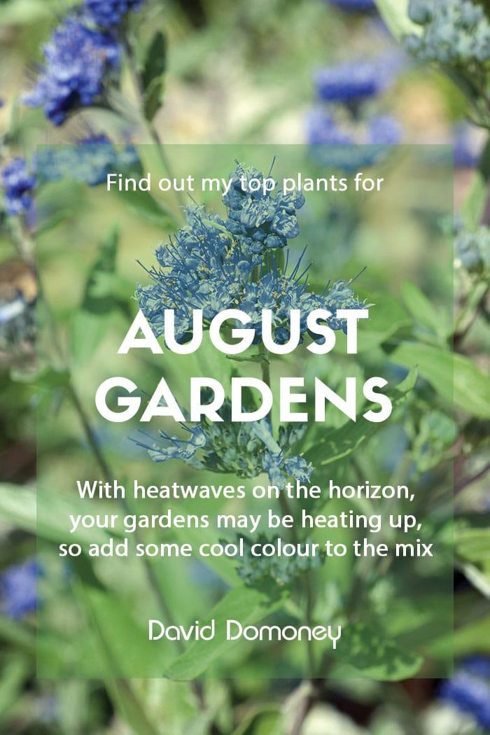 Top ten plants for August