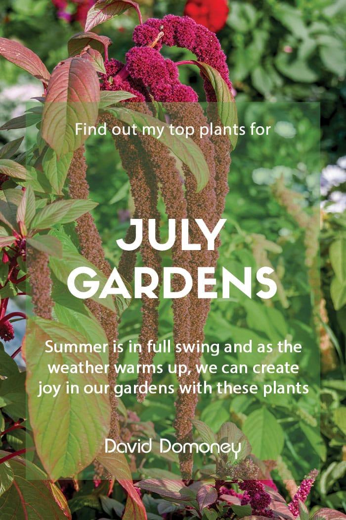 Top ten plants for July gardens