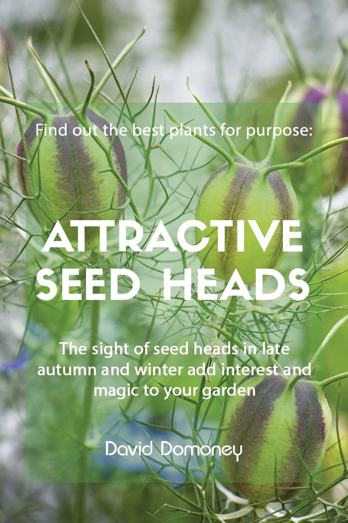 Plants for purpose - Plants with attractive seed heads
