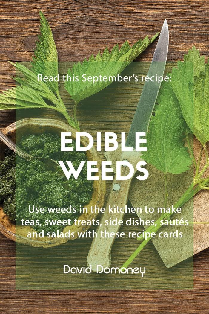 Recipe September Edible weeds