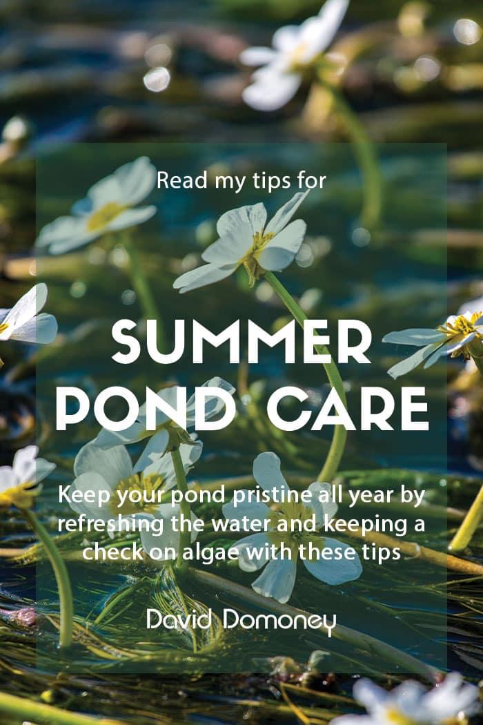 Summer pond care tips
