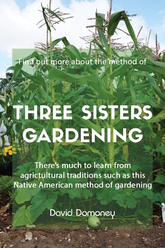 Three Sisters gardening method