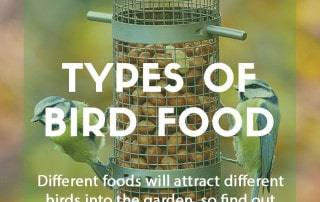 A guide to types of bird food