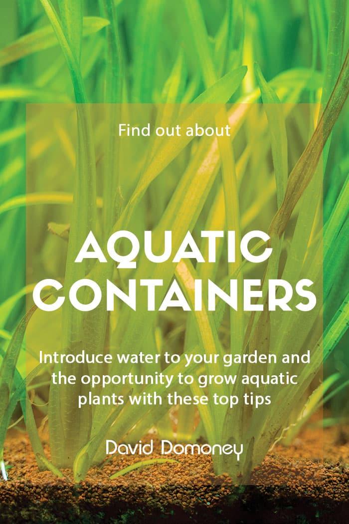 Aquatic container planting designs