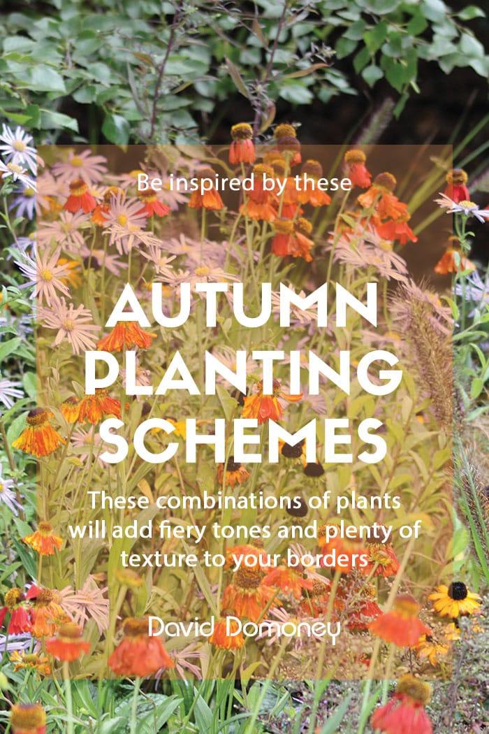 Autumn planting schemes