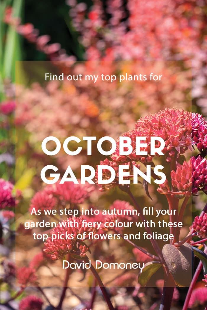Top ten plants for October gardens