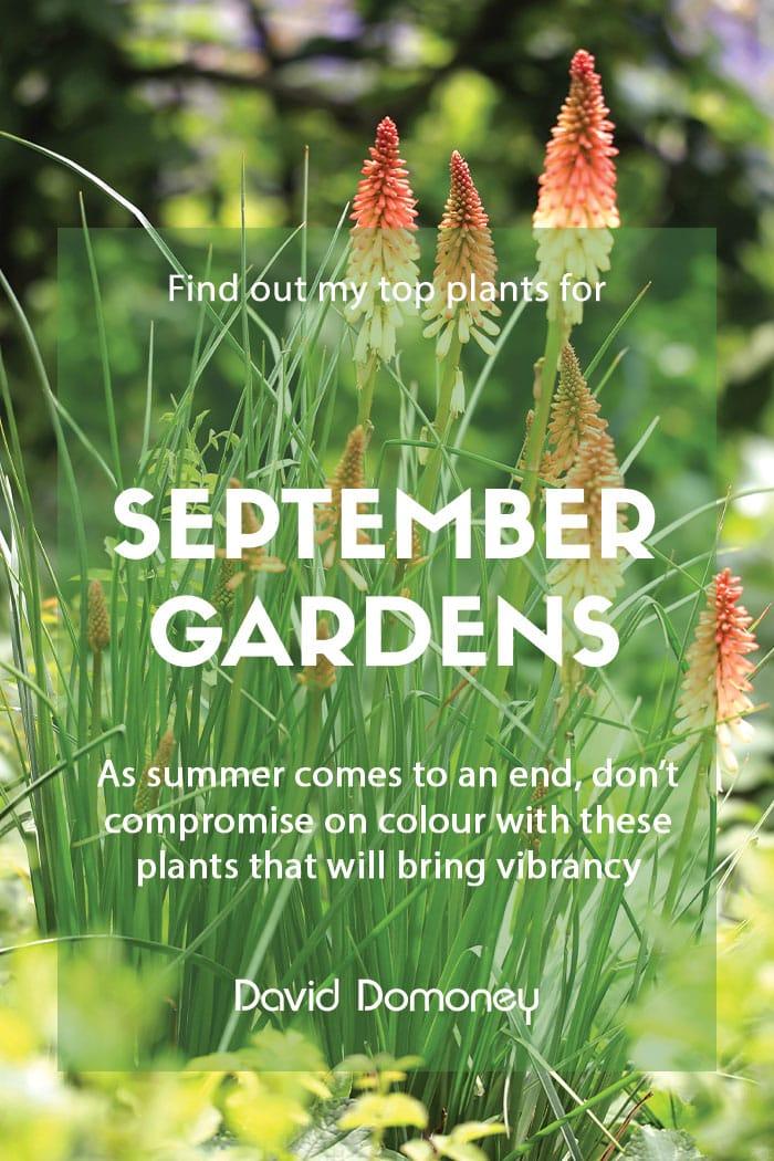 Top ten plants for September