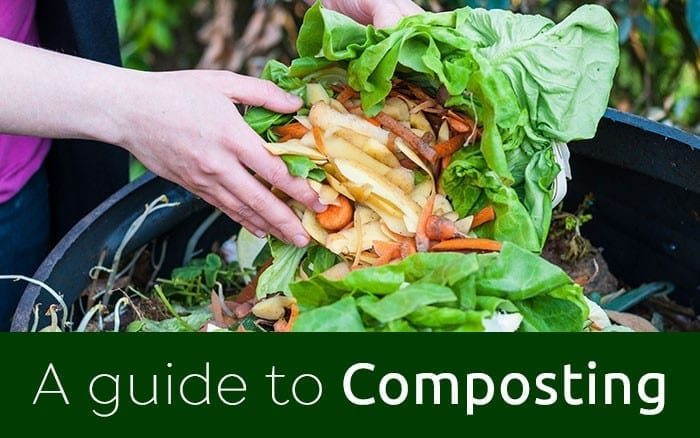 compost related blog