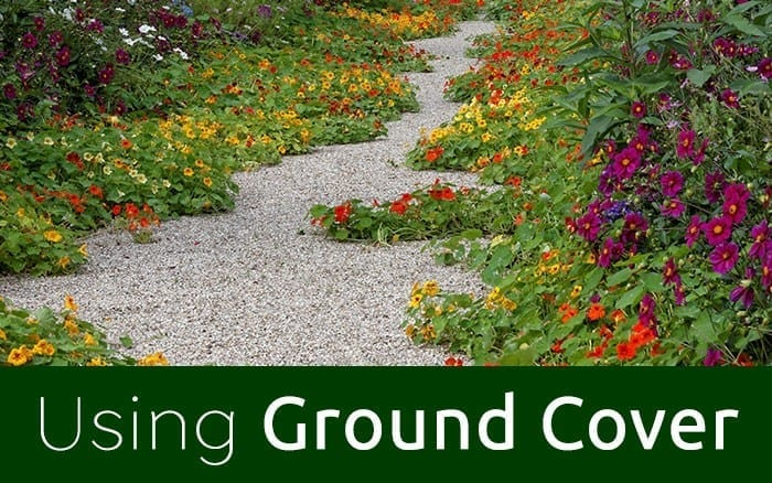 ground cover feature