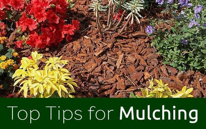 mulching feature image