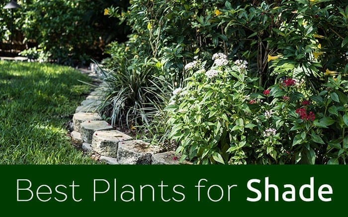 shade plants feature