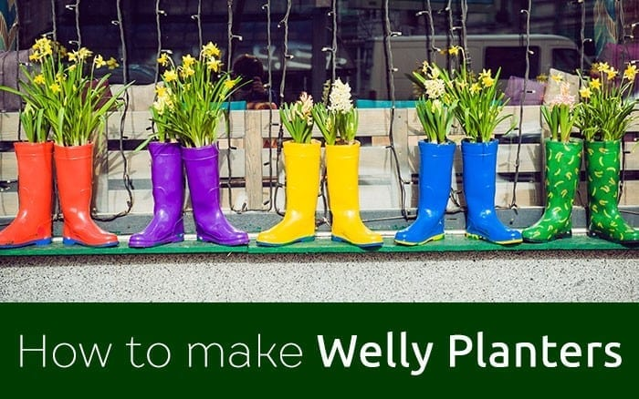 welly planter new feature