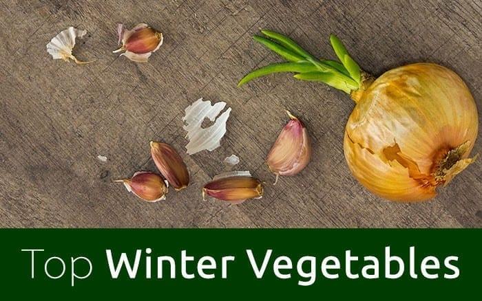 winter-veg