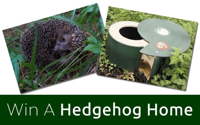 Win a hedgehog home
