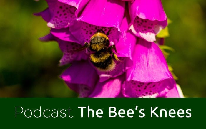Cottage garden design ideas hints and tips david domoney for Garden design podcast