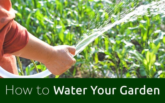 Watering-blog-image