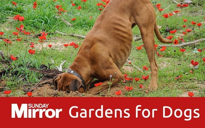 Feature-image-dog-friendly-garden